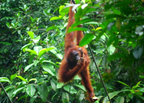 Sarawak, Borneo. © Karen Edwards