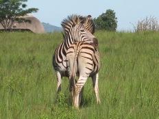 Mbabane, Swaziland. © Karen Edwards