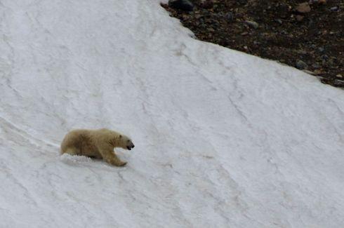 Going downhill fast, Svalbard. © Karen Edwards