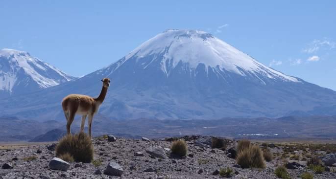 COPYRIGHT KARENNEDWARDS_POPANDPRETTYTHINGS_Chile_PNLauca